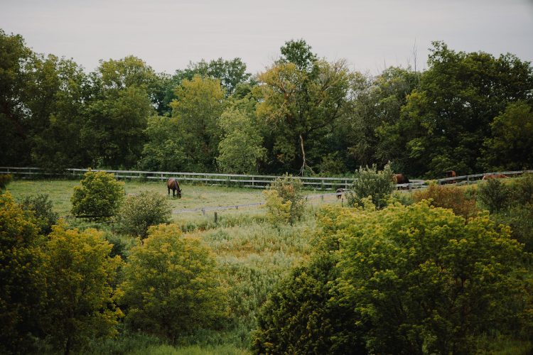 View of ranch field, horses grazing